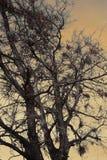 Foresta frequentata Fotografia Stock
