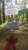 Foresta frequentata Immagini Stock Libere da Diritti