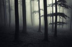 Foresta frequentata buio con nebbia misteriosa Immagini Stock Libere da Diritti