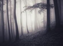 Foresta frequentata di fantasia Fotografia Stock Libera da Diritti