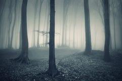 Foresta frequentata di Halloween con nebbia Fotografia Stock Libera da Diritti