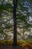 Foresta fresca Fotografia Stock Libera da Diritti
