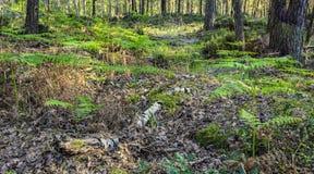 Foresta fresca in primavera immagine stock
