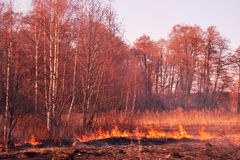 Foresta in fuoco Immagine Stock