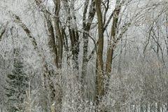 Foresta gelida immagini stock libere da diritti