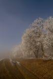 Foresta ghiacciata Fotografie Stock