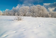 Foresta ghiacciata di inverno Fotografia Stock Libera da Diritti