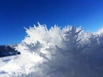 Foresta ghiacciata di Kanas nell'inverno Immagine Stock Libera da Diritti