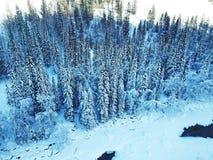 Foresta ghiacciata di Kanas nell'inverno Fotografia Stock Libera da Diritti