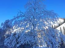 Foresta ghiacciata di Kanas nell'inverno Immagini Stock Libere da Diritti