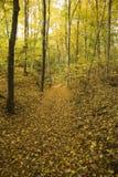 Foresta gialla Fotografia Stock