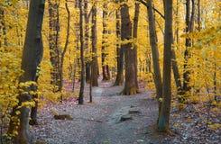 Foresta gialla fotografia stock libera da diritti