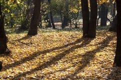 Foresta gialla Immagini Stock