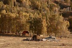 Foresta gialla in autunno con una casa di legno Fotografia Stock