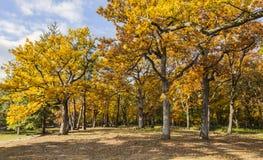 Foresta gialla di autunno fotografie stock libere da diritti