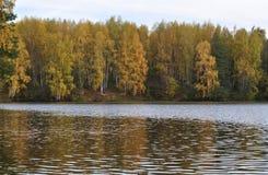 Foresta gialla di autunno sulla sponda del fiume Fotografie Stock