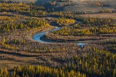 Foresta gialla luminosa di autunno nelle montagne di Altai Fotografia Stock