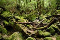 Foresta giapponese spessa Fotografia Stock Libera da Diritti