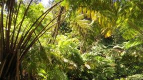 Foresta gigante Fotografia Stock