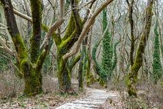 Foresta in Grecia Immagini Stock Libere da Diritti