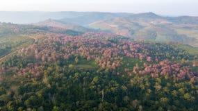 Foresta himalayana selvaggia della ciliegia vicino al aera di agricoltura sulla montagna Immagine Stock Libera da Diritti
