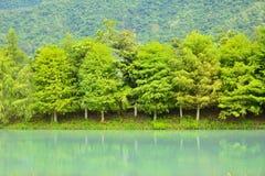 Foresta a Hualien Fotografia Stock Libera da Diritti