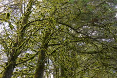 Foresta I Fotografie Stock