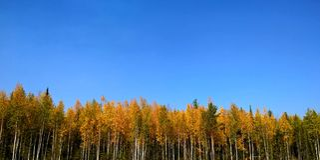 Foresta il giorno soleggiato fotografie stock