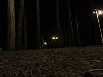 Foresta illuminata alla notte Fotografia Stock