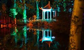 Foresta illuminata alla notte Immagini Stock