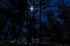 Foresta illuminata dalla luna Immagini Stock Libere da Diritti