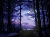 Foresta illuminata dalla luna di inverno Fotografie Stock Libere da Diritti