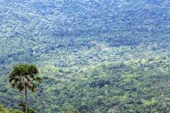 Foresta immensa Immagine Stock Libera da Diritti