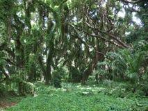 Foresta incantata Fotografie Stock