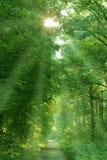 foresta incantata Fotografie Stock Libere da Diritti