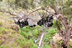 Foresta incavata: Caverna del lago, Australia occidentale Fotografia Stock Libera da Diritti