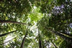 Foresta in Indonesia Immagine Stock
