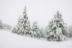 Foresta innevata fotografie stock