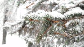 Foresta innevata del pino immagini stock