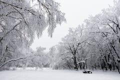 Foresta innevata nel giorno di inverno gelido Fotografia Stock