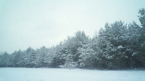 Foresta innevata nella stagione invernale video d archivio