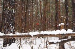Foresta innevata in Siberia immagini stock