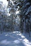 Foresta innevata un giorno di inverno soleggiato Fotografia Stock