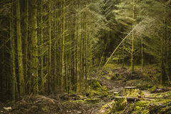 Foresta invasa in Dartmoor fotografia stock libera da diritti