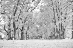 Foresta invecchiata di legno di pino contro vento dalla spiaggia dell'oceano, lo astratto Fotografie Stock