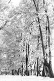 Foresta invecchiata di legno di pino contro vento dalla spiaggia dell'oceano, lo astratto Fotografia Stock Libera da Diritti