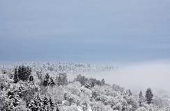 Foresta in inverno Immagini Stock