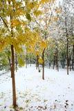 Foresta in inverno Immagine Stock
