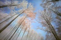 Foresta in inverno Immagini Stock Libere da Diritti