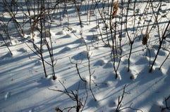 Foresta in inverno Fotografia Stock